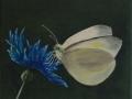 Schmetterling mit Kornblume
